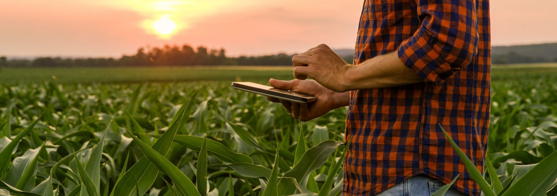 Agribusiness Science & Technology